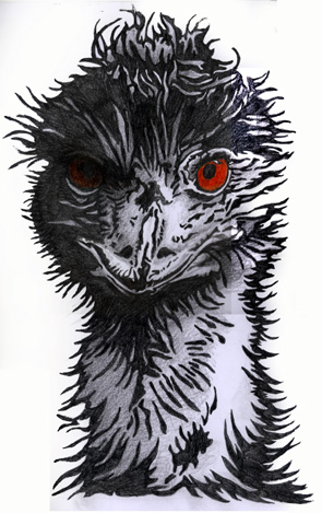 Emu drawing 1