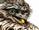 Tawny Frogmouth Pencil - watercolour