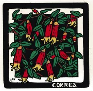 Correa reflexa Linocut