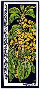 Golden Wattle Wildflower Card
