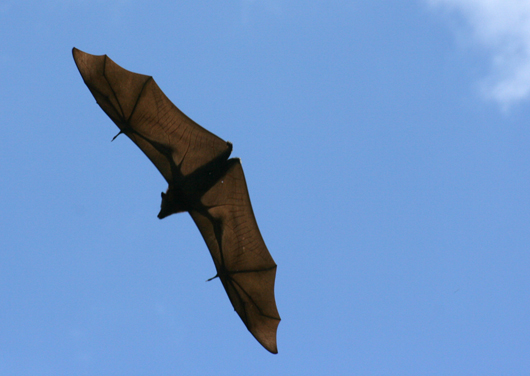 Flying Fox 4
