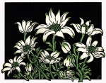 Flannel Flowers - Set 12