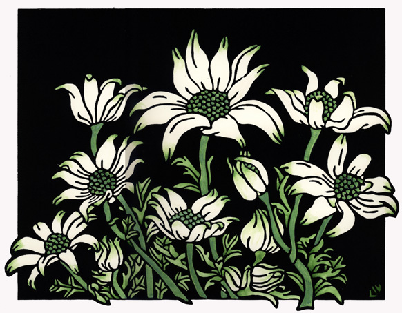 Flannel Flowers - Set 12