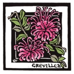 Pink Spider Flower - Grevillea sericea - Linocut