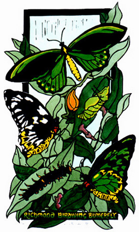 Richmond Bordwing Butterfly Lifecycle - Linocut
