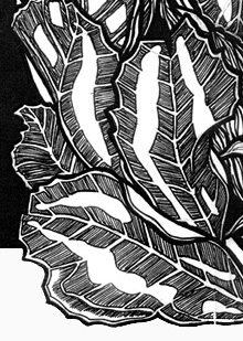 Waratahs leaves design