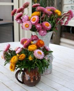 Vases of Strawflowers 1