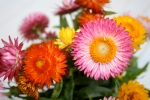 Strawflowers Vase 2
