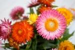 Strawflowers Vase 2