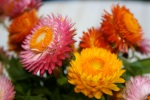 Strawflowers Vase 3