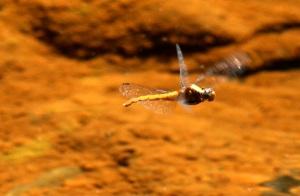 dragonfly-web-4