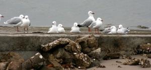 seagulls-on-boat-rampweb