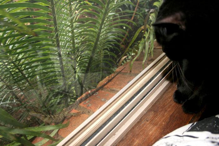 windowwaterdragoncat