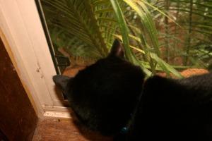 windowwaterdragoncat1