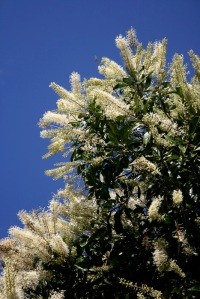 ivory-curl-flower-tree-2