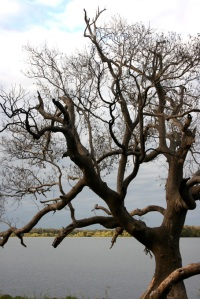 OldTree8