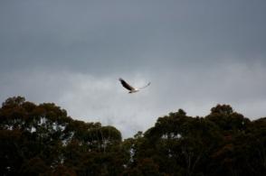 Sea Eagle 14