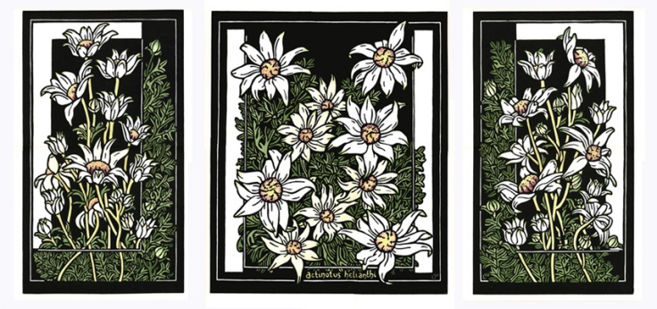 93 Flannel Flower tryptich