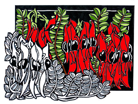 Sturt Desert Pea CARD 2012 COLOUR WEB