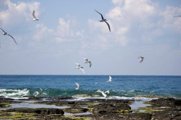 Birds in FLight 2