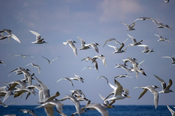 Birds in FLight 3