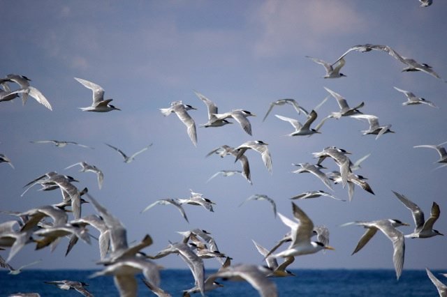 Birds in FLight 3
