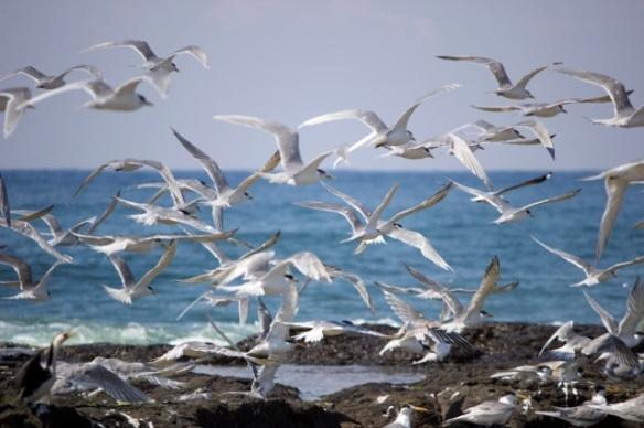 Birds in FLight 4