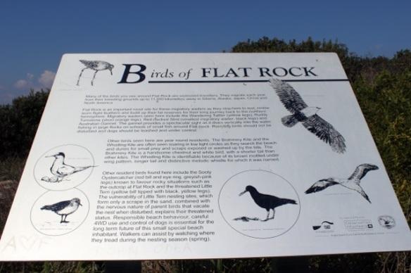 BirdS of Flat Rock