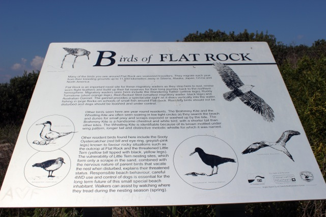 BirdS of Flat Rock