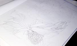 Seaside Wildflowers Drawing 1