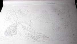 Seaside Wildflowers Drawing 2