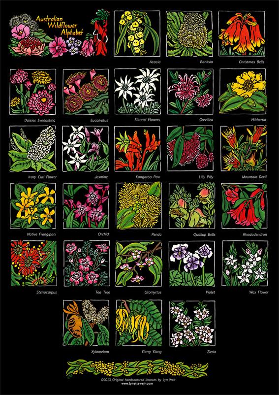 SOULSONG - Lynette Weir - Australian Wildflower Alphabet WEB