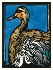 Pacific Black Duck Snapshot