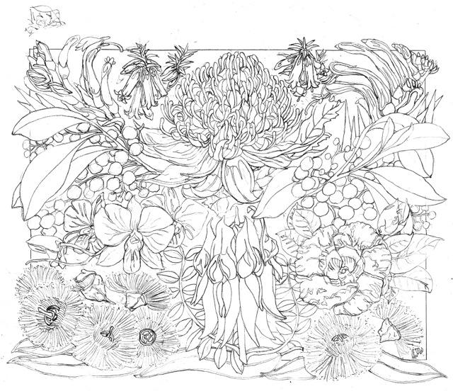 Australian Bushland Drawings Australian Floral Emblems 2014